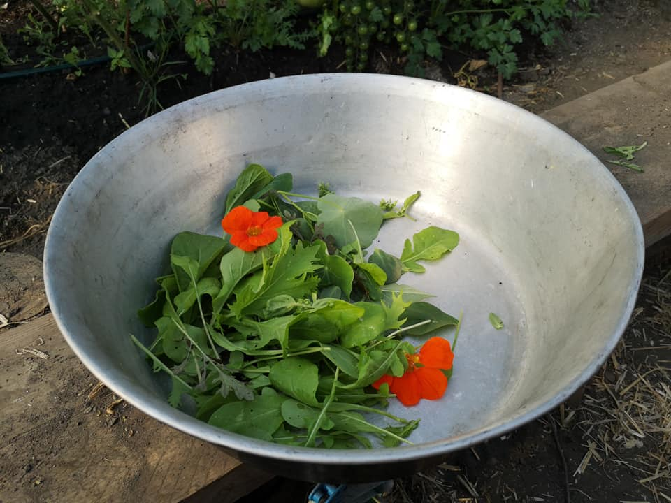 Salad leaves in a silver bowl.